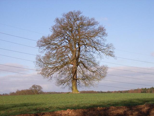Farmland and tree near Winchmore Hill