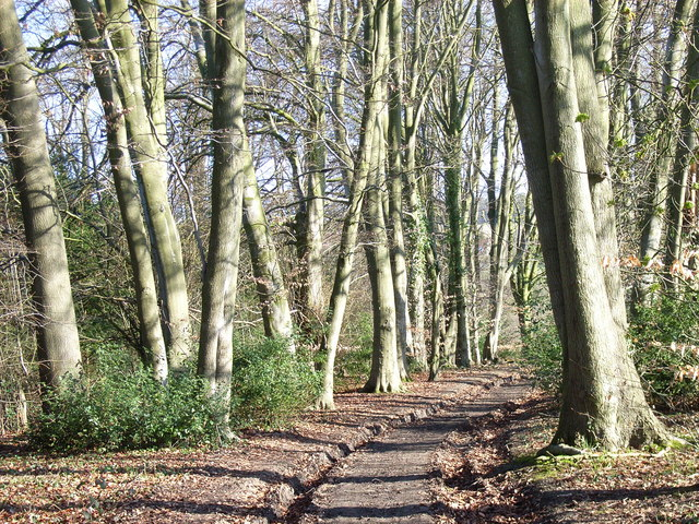 Track and beeches, near Winchmore Hill