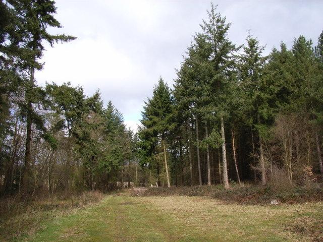 Owlsears Wood