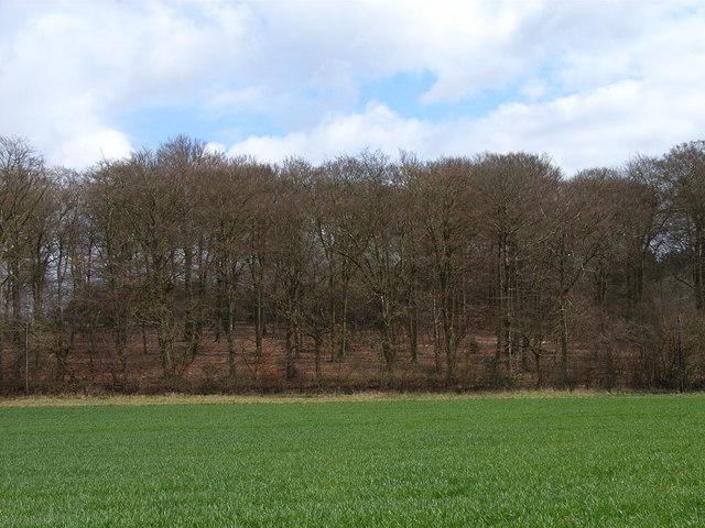 Sandels Wood