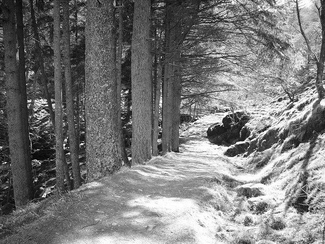 Forest walk, Lochgoilhead