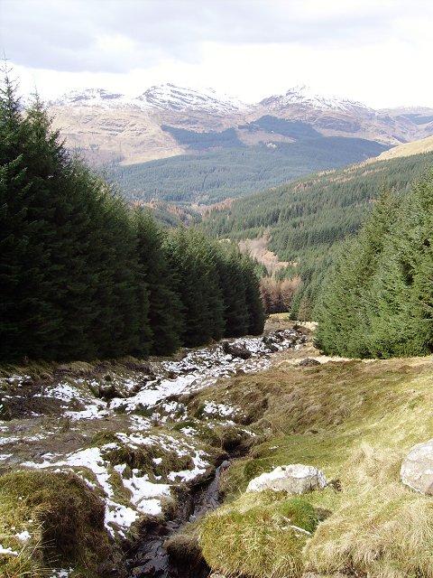 Forest, Lochgoilhead.