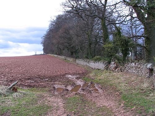 Yarrowbank Plantation