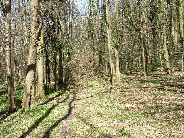 Beamond Wood