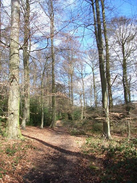 Saunder's Wood