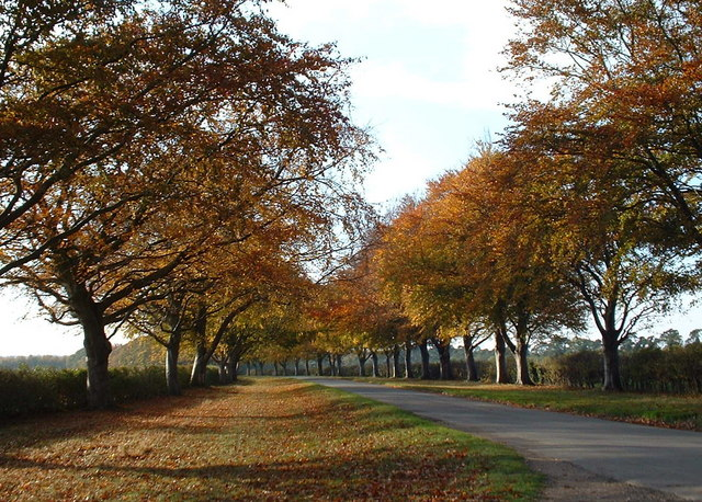 Autumn time along Kings Avenue, Sandringham.