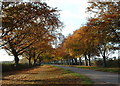 TF7229 : Autumn time along Kings Avenue, Sandringham. by Andy Peacock