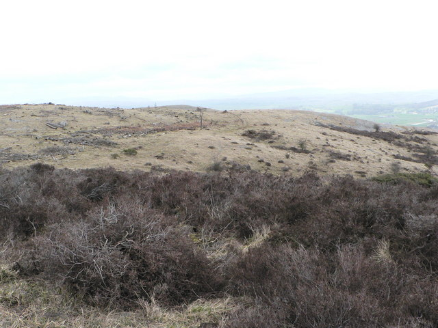 Whitbarrow (deforested!)
