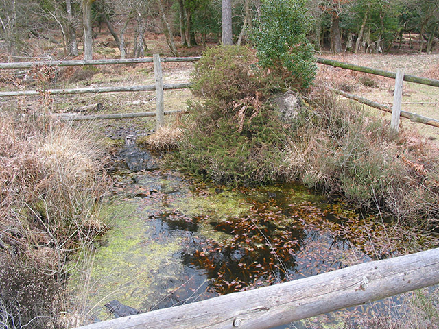 Spring flowing into Highland Water east of Lucas Castle