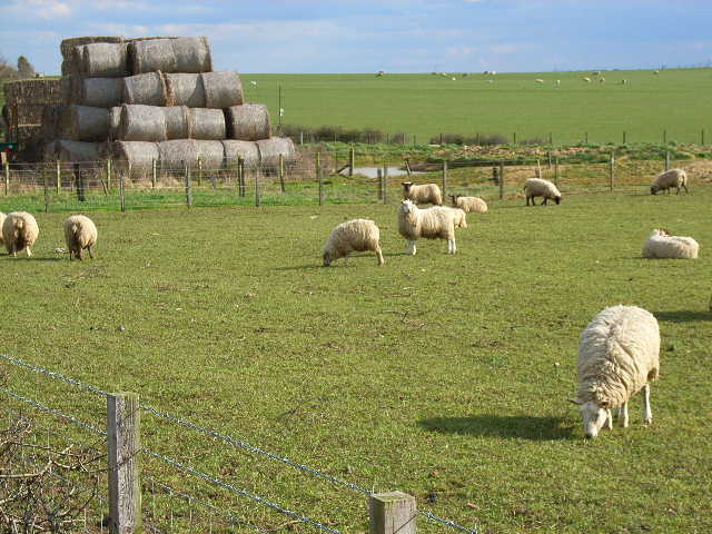 Haswell Moor Farm