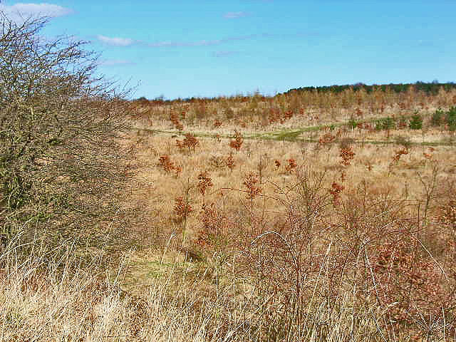 Plantation south of Hurworth Burn Reservoir