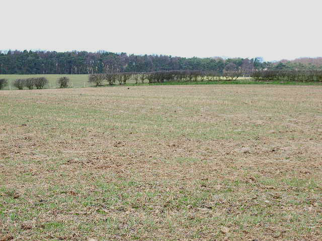 Field to the north of Green Lane