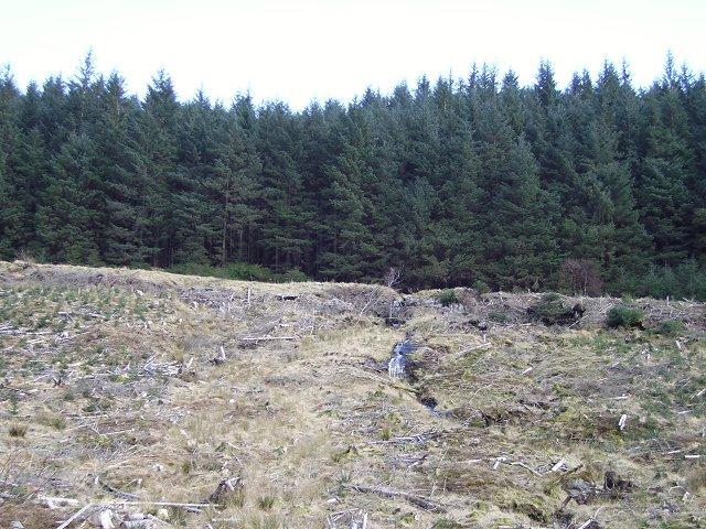 Forest, Gleann Mor