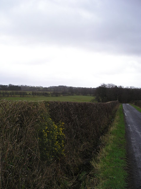 Roadside Hedge and Ditch