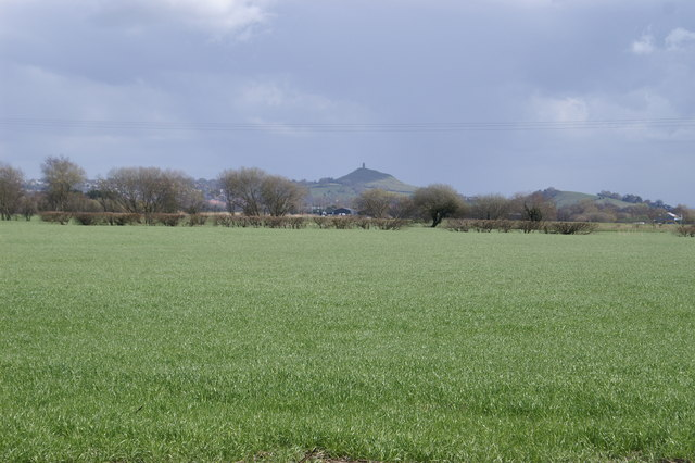 Field, with Glastonbury Tor in the background