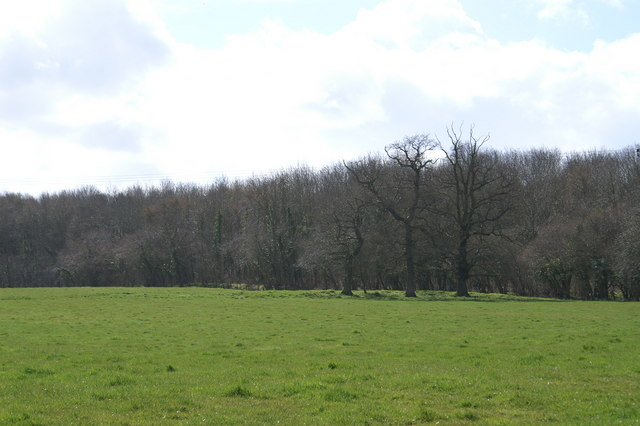 Loxley Wood