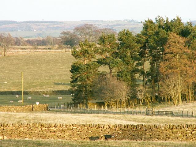 Farmland at Bees Cottage