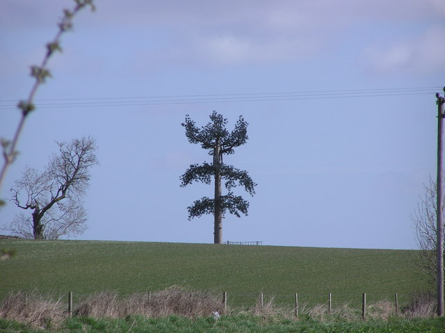Phone Mast ; Ely Hill.