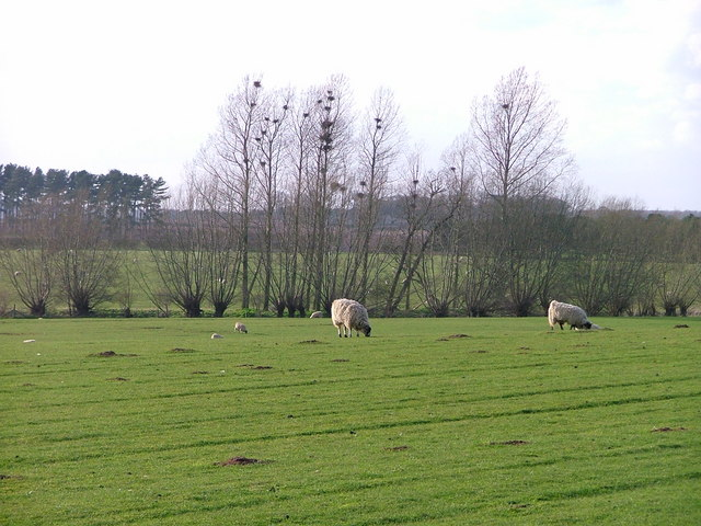 Pasture on the Banks of the River Ryton