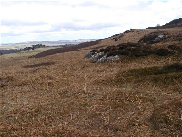 View Along the NW Facing Slope Above Callaly