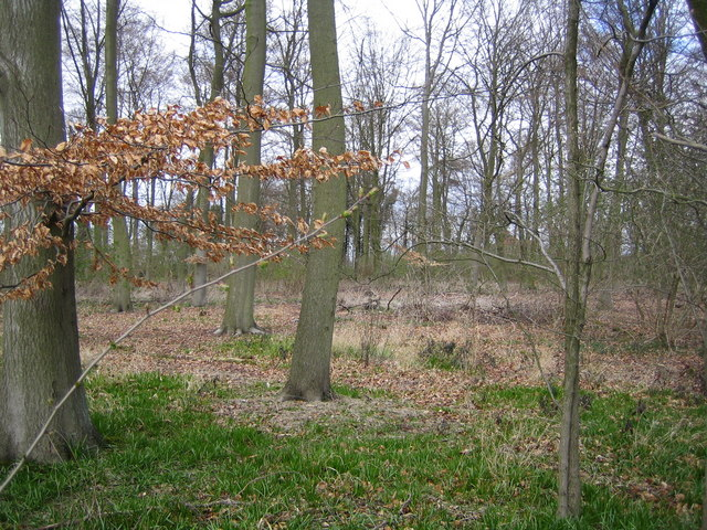 Wooburn Common: Dipple Wood