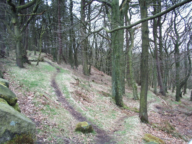 Footpaths, Tockholes No 3 Plantation