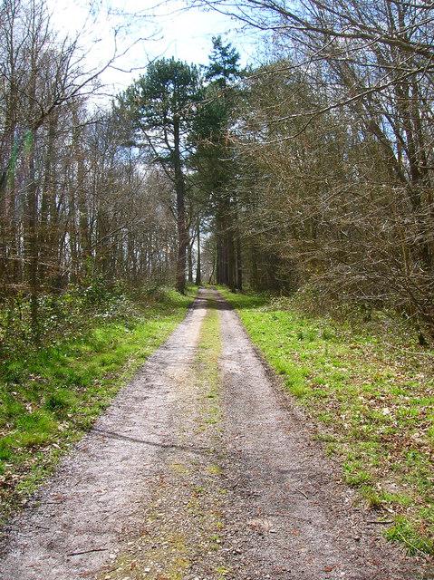 Dallas Lane, Agmond's Wood