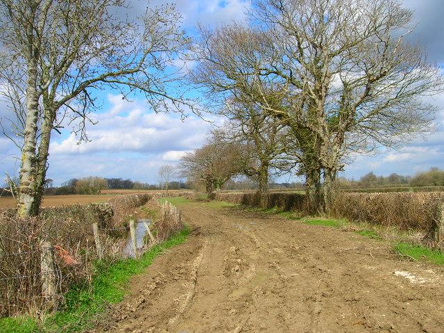 Blunts Lane