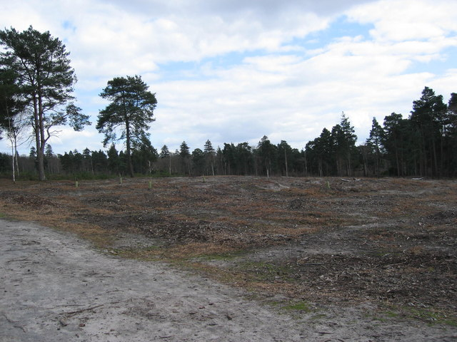 Ockham Common heath maintenance