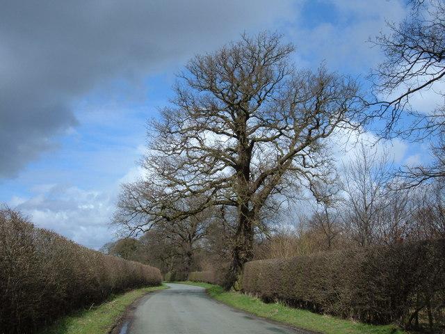 Congleton Lane, Chapel Wood