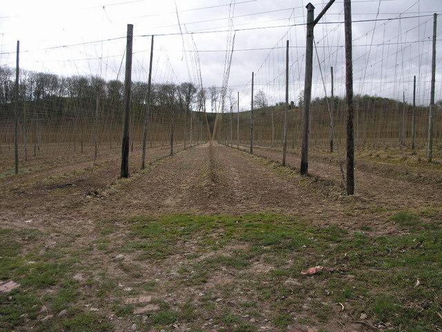 Farming Telegraph Poles