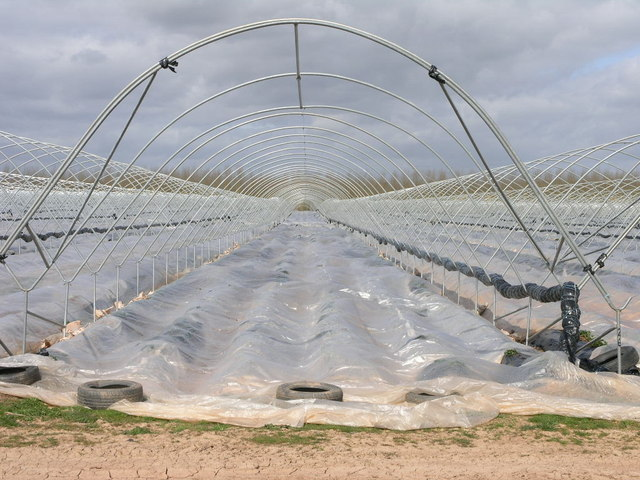 Polytunnel to the Horizon