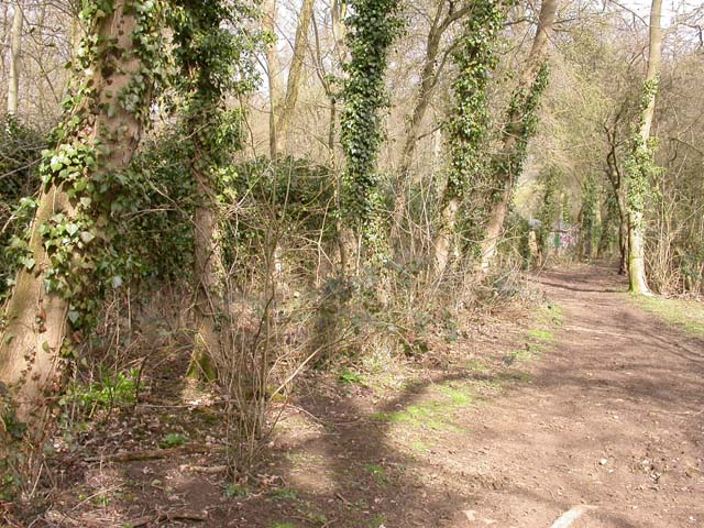Byway past Blackthorn Wood