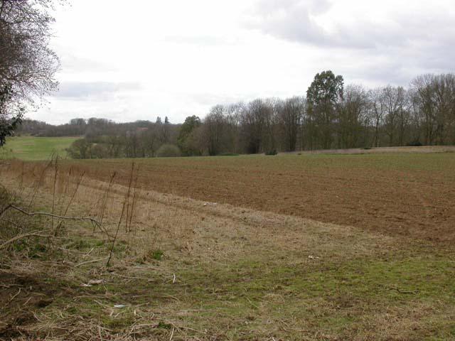 Ecton Field Plantation