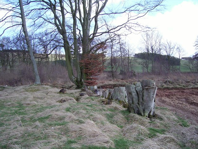 Harehope Wood