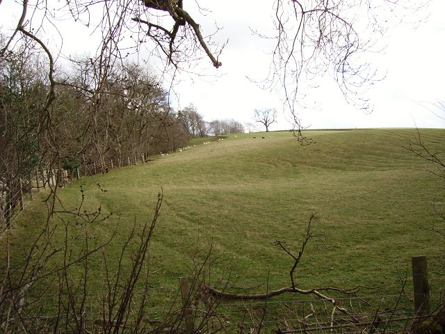 Sheep pasture, Bankhead.