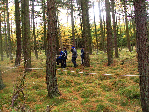 Tree Challenge in the High Wood