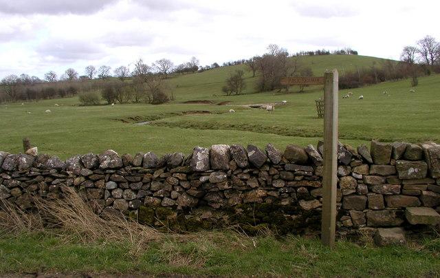 Footpath through meadow