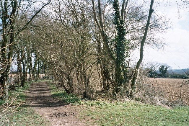 Tree-lined stretch of the Oxfordshire way