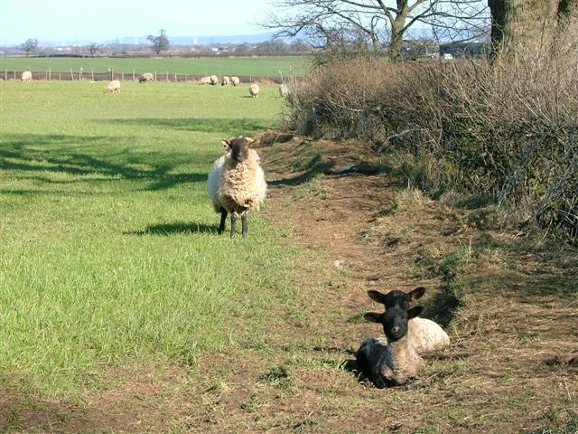 Pasture, Lea Close