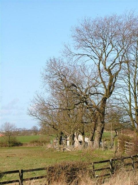 Trees Aligning Redmarsh Road