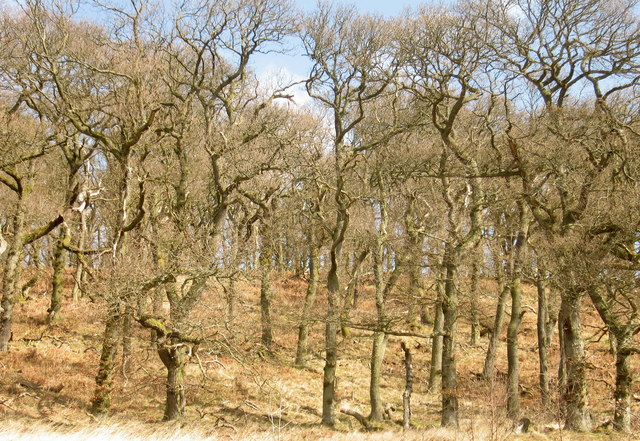 Aikyside Wood, Borders
