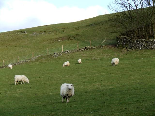 Field near Coed Bronydd Isaf