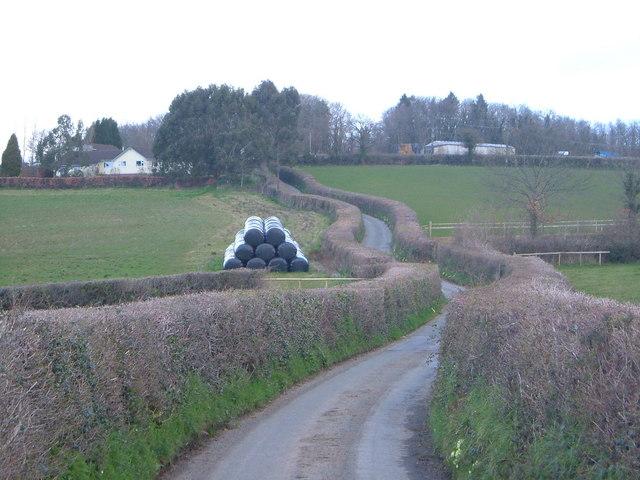 Lane near Chudleigh Knighton