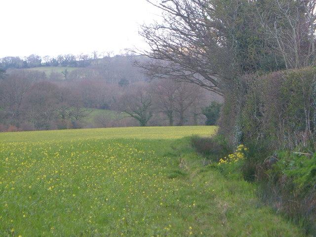 Field near Chudleigh Knighton