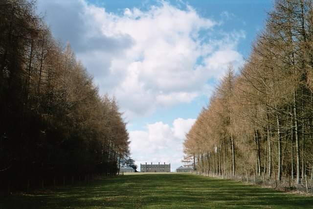 Avenue of trees leading to Ditchley