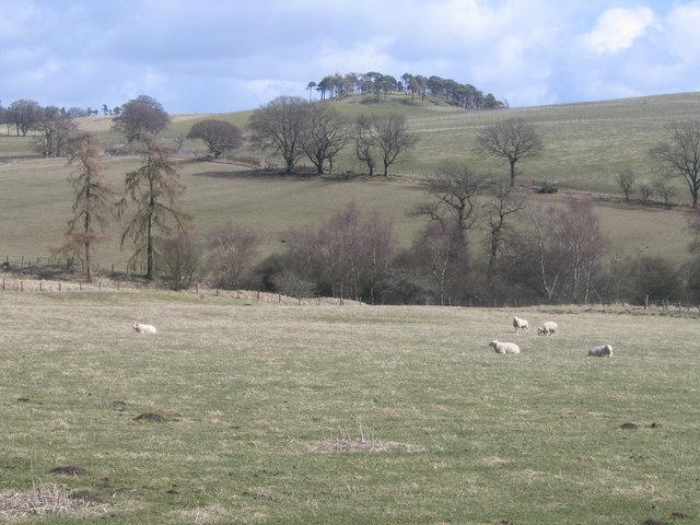 Lindsaylands Hill