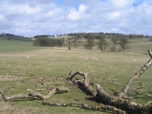 Towards Lindsaylands Hill