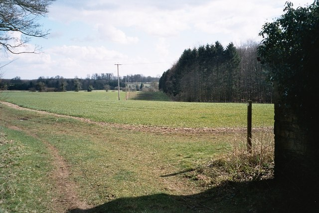 Eastern edge of Deadman's Riding Wood