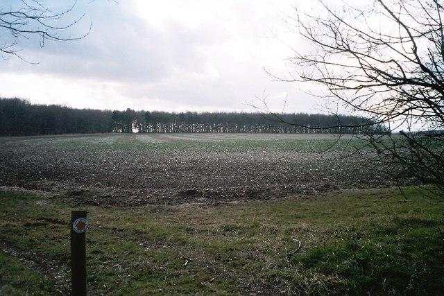 David's Plantation